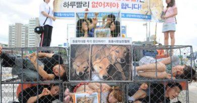 Cierra oficialmente el mercado de carne de perro más grande de Corea del Sur