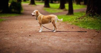 Estas son las 13 cosas que puedes hacer para encontrar a tu perro o gato perdido