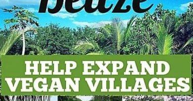 Resort vegano ofrece 3 meses de estadia gratis en Belice