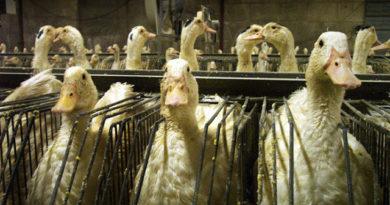 """Nueva York se convierte en la ciudad más grande del mundo en prohibir """"foie gras"""""""