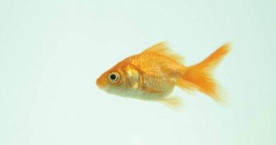 La cadena Walmart dejará de vender peces vivos