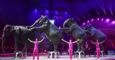 Dinamarca pagó $ 1.6 millones para liberar a cuatro elefantes de circo