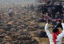 ¡Ignoraron la prohibición!: Más de 250 mil animales fueron asesinados en el festival de Nepal