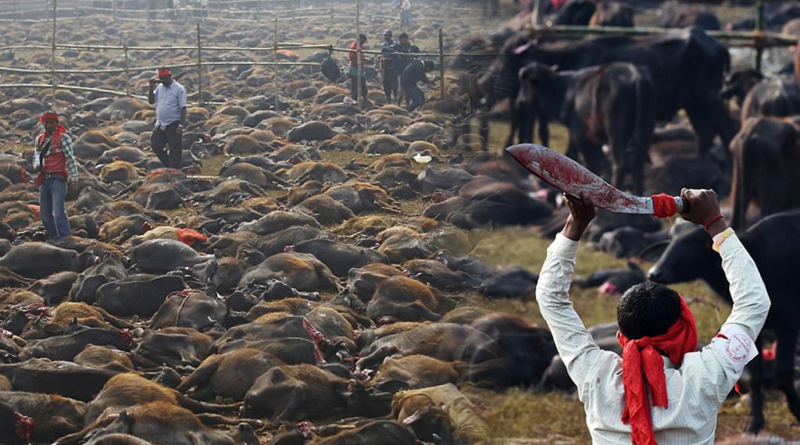 Más de 250 mil animales fueron asesinados en el festival de Nepal