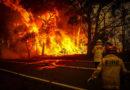 Alrededor de medio billón de animales han muerto por los incendios en Australia