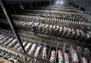 Suiza: Gobierno puede pronto cerrar todas las granjas industriales del país