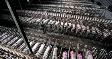 Gobierno puede pronto cerrar todas las granjas industriales del país