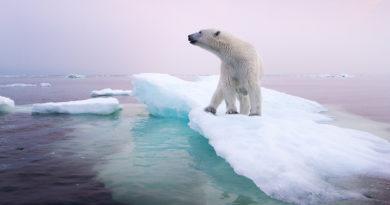 La crisis climática podría acabar con un tercio de las especies de plantas y animales en 50 años