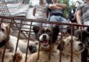 ¡Lo último!: Una ciudad china prohíbe la carne de perro por la rápida expansión del coronavirus
