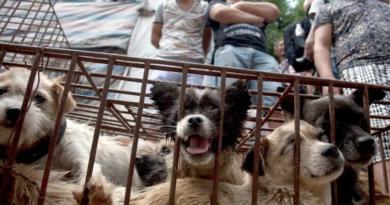 Una ciudad china prohíbe la carne de perro por la rápida expansión del coronavirus