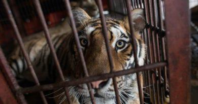 activistas piden cerrar el trafico y consumo de animales