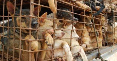 Vietnam analiza prohibir el comercio de vida silvestre para reducir el coronavirus