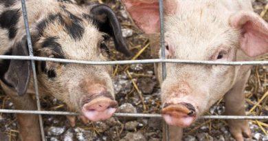 Greenpeace pide una reducción del 71% en el consumo de carne en Europa para el 2030