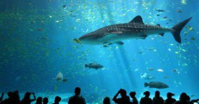 acuario vancouver a punto de cerrar por falta de ingresos