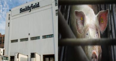 smithfield cierra matadero