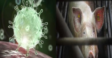 abandonemos la carne para prevenir la proxima pandemia