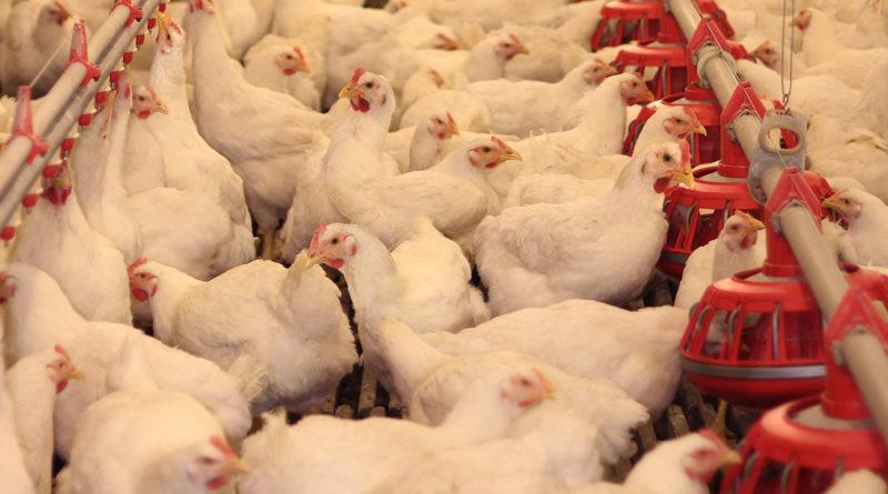 no a la agricultura animal
