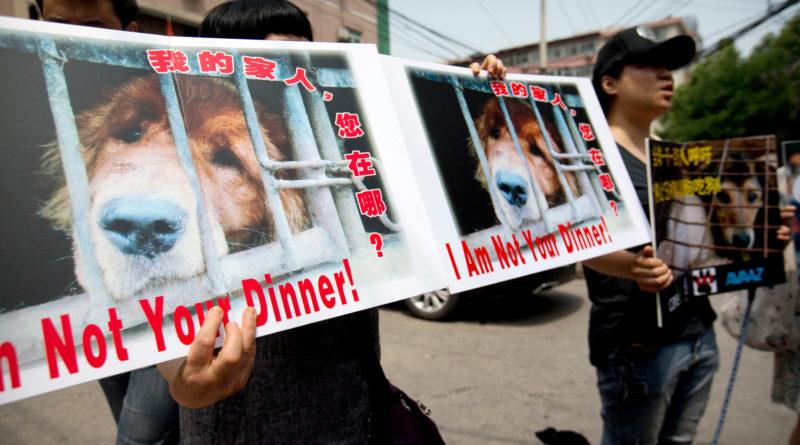 ciudad prohibe carne de perro en china