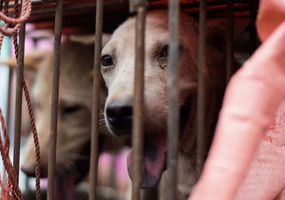 comercio de carne de perro en china llegando a su fin