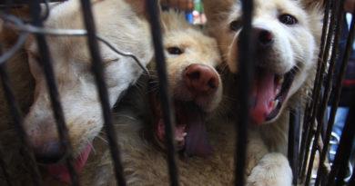 shenzhen primera ciudad en prohibir carne de perro