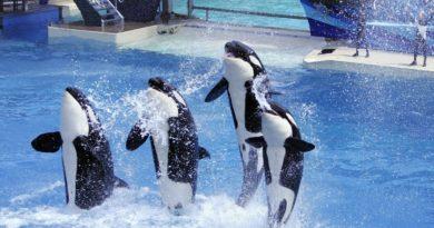 ofrece dinero a seaworld para dejar a los animales en paz