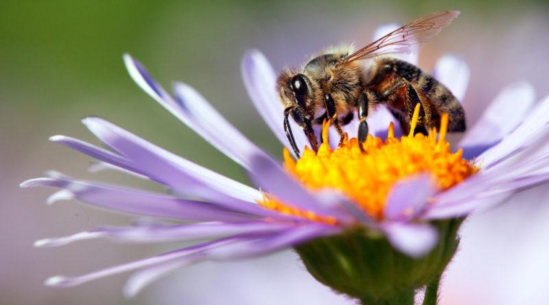 abejas confinamiento