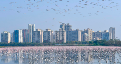 flamingo india