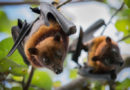 China: La ciudad de Wuhan prohíbe el consumo y venta de animales salvajes por 5 años