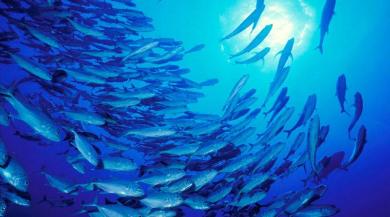 coronavirus golpea la industria pesquera