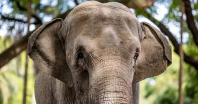 Mara, la elefanta