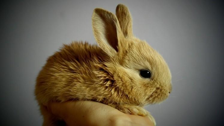 Colombia prohibirá las pruebas cosméticas con animales para el 2024
