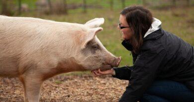 Visitas a santuario de animales ayudan a los visitantes a abandonar los productos animales, según estudio
